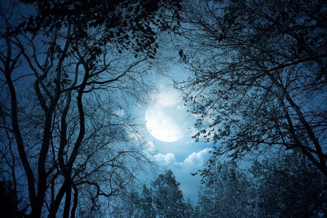 Sky Night Moon Branches Nature b wallpaper
