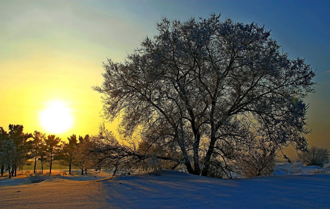 Russia Winter Sunrises and sunsets Trees Snow Sun Nature wallpaper