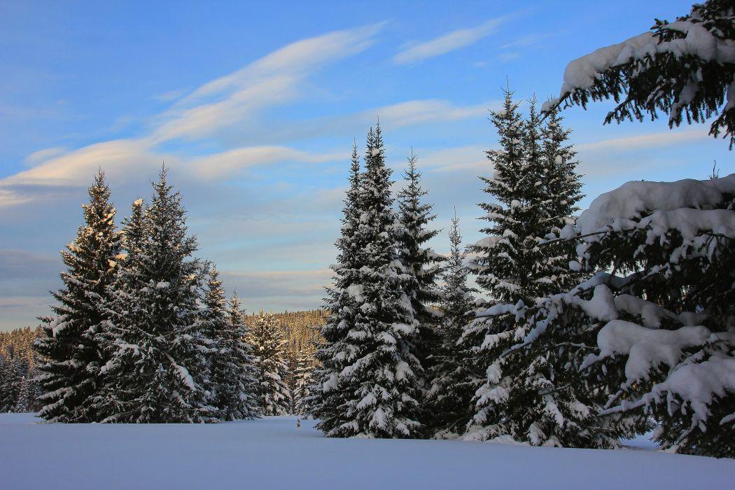Winter Sky Fir Snow Nature f wallpaper