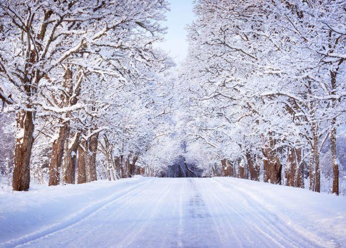 Winter Roads Trees Snow Nature wallpaper