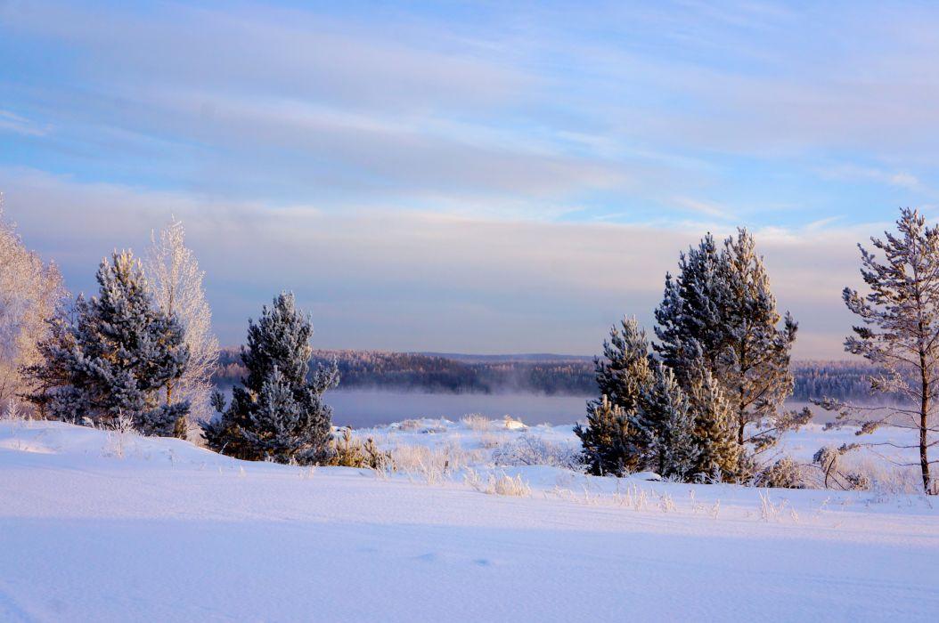 Winter Sky Fir Snow Nature wallpaper