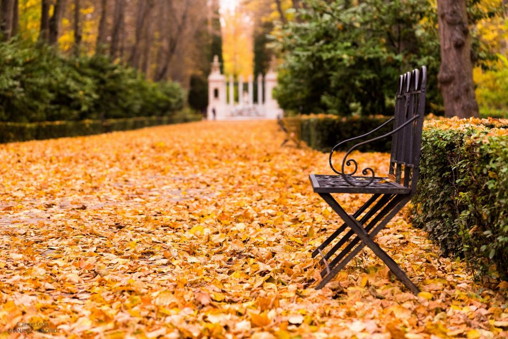 Autumn Foliage Bench Cities wallpaper