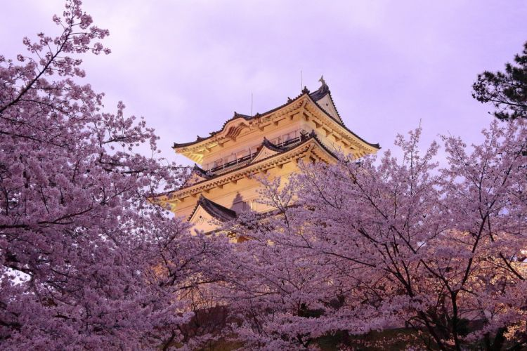 Pagoda Japan Spring Sakura Cities wallpaper