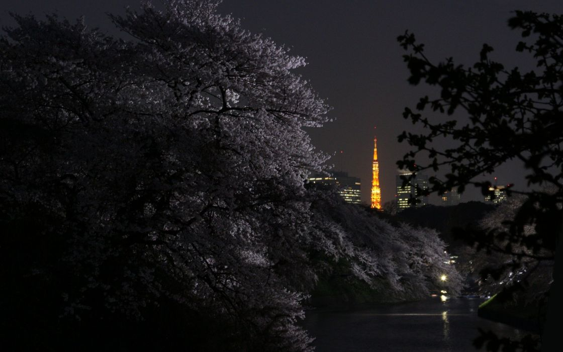 Tokyo Japan Night Branches Cities wallpaper