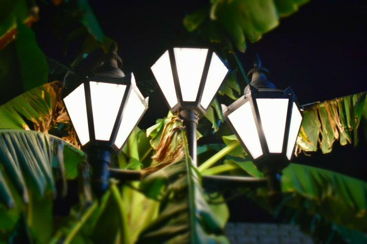 3 farolas luces palmera wallpaper