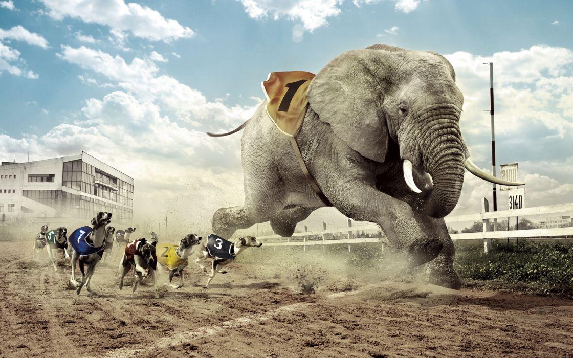carrera galgos elefante abstracto humor wallpaper