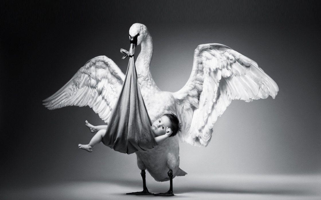 stork baby wonder black white gift wallpaper