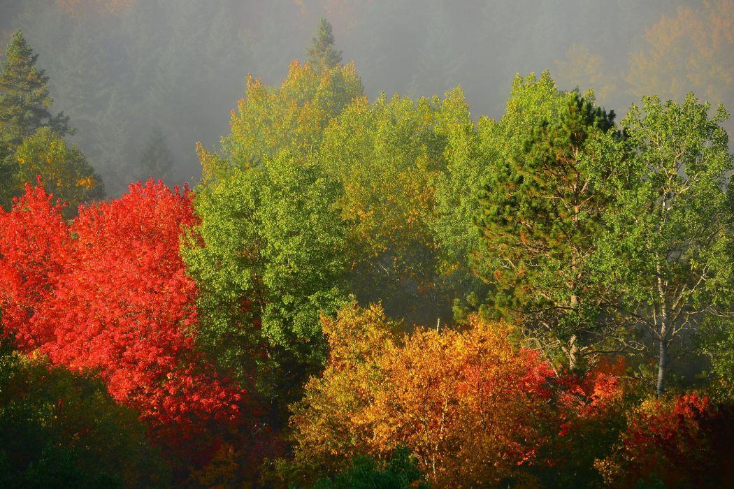 trees autumn foliage fog wallpaper