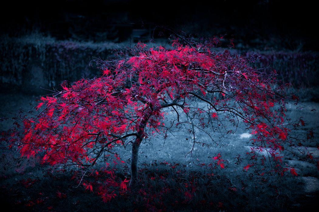 tree leaves fog light purple autumn wallpaper
