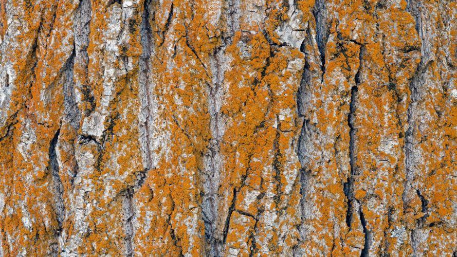abstracto textura corteza tronco arbol moho wallpaper