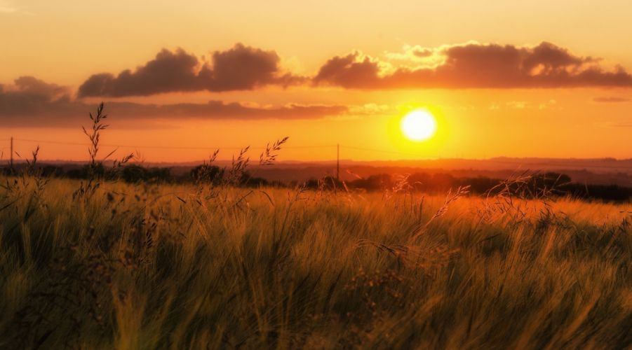 beautiful nature grass sunset field sky wallpaper