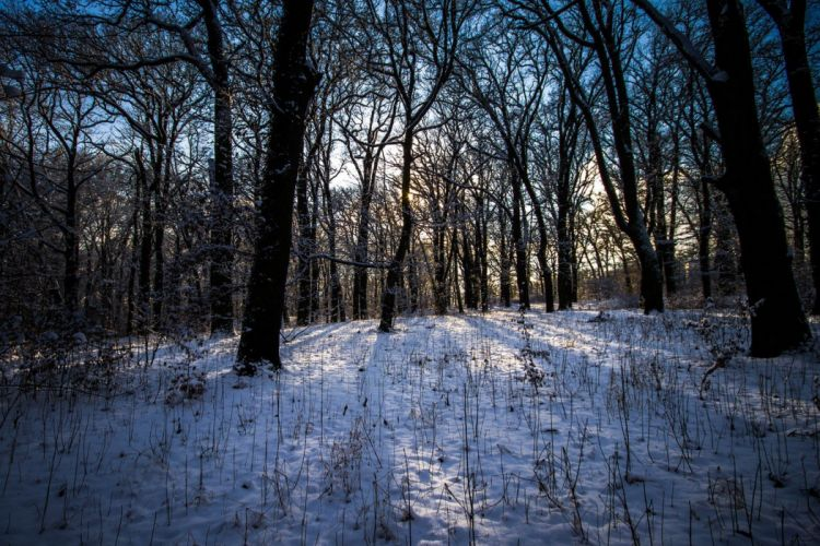 beautiful nature winter forest landscape wallpaper