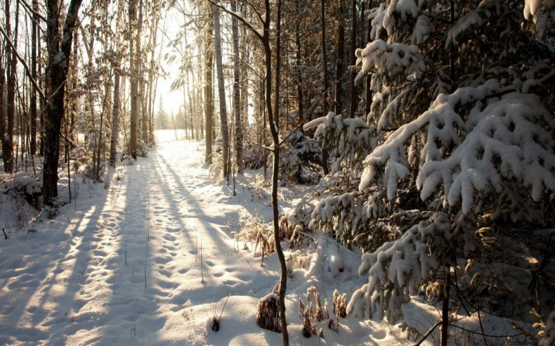 beautiful nature forest snow winter wallpaper