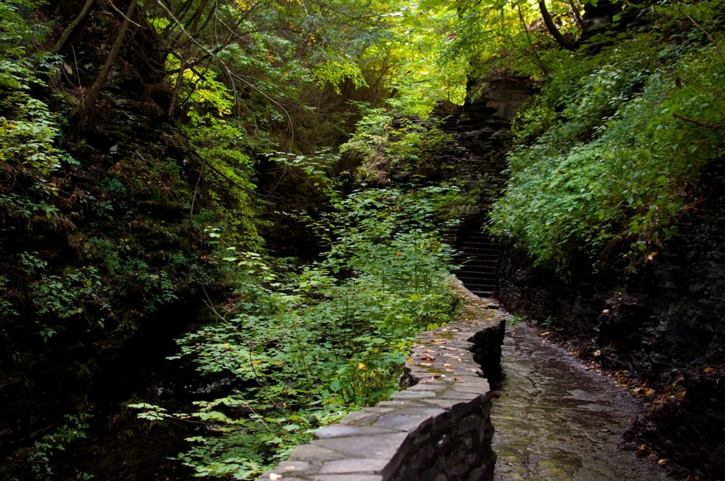 beautiful nature forest path steps nature wallpaper