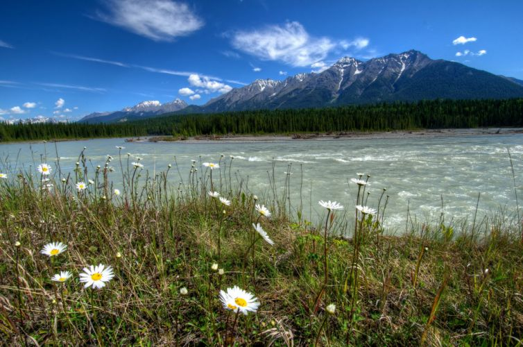 beautiful nature rivers of canada parks landscape daisies mountains vermilion kootenay nature wallpaper