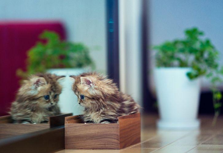 kitten casket flowers plants mirror reflection wallpaper
