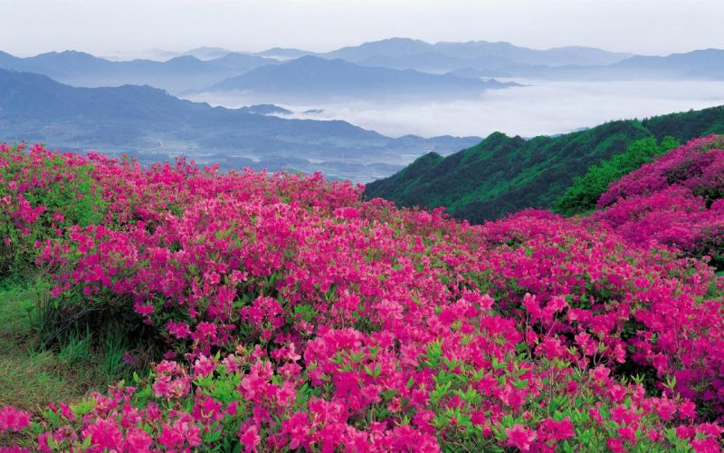 flowers mountains pink slope wallpaper