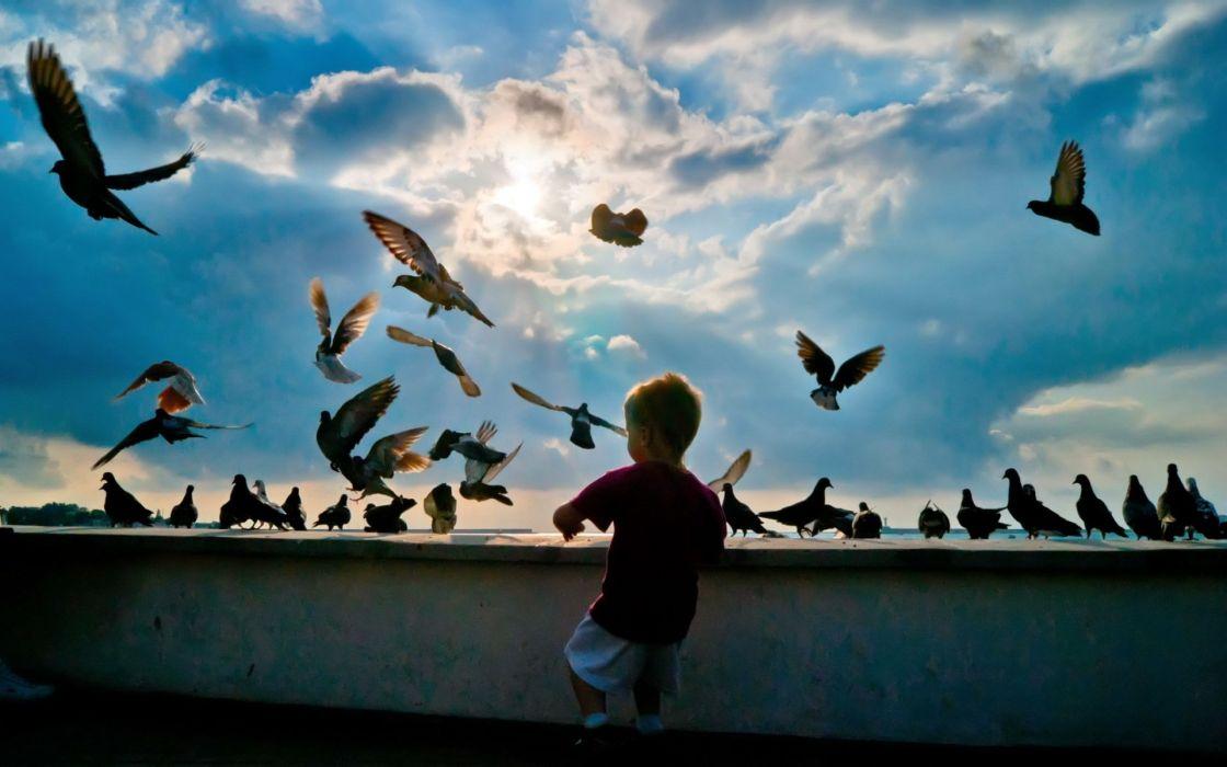 child pigeons birds flying hobby wallpaper