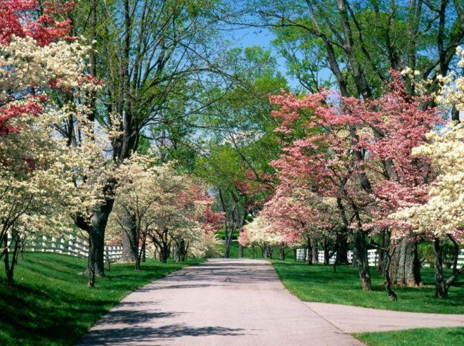 park trees spring tree nursery flowering path wallpaper