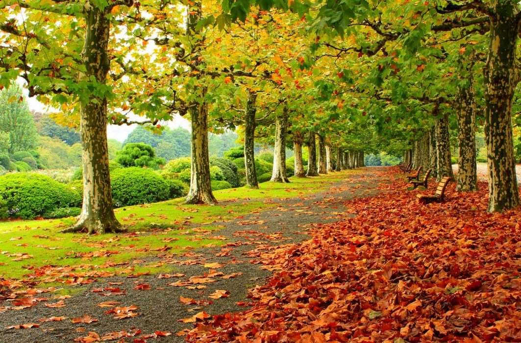 park autumn foliage benches trees wallpaper