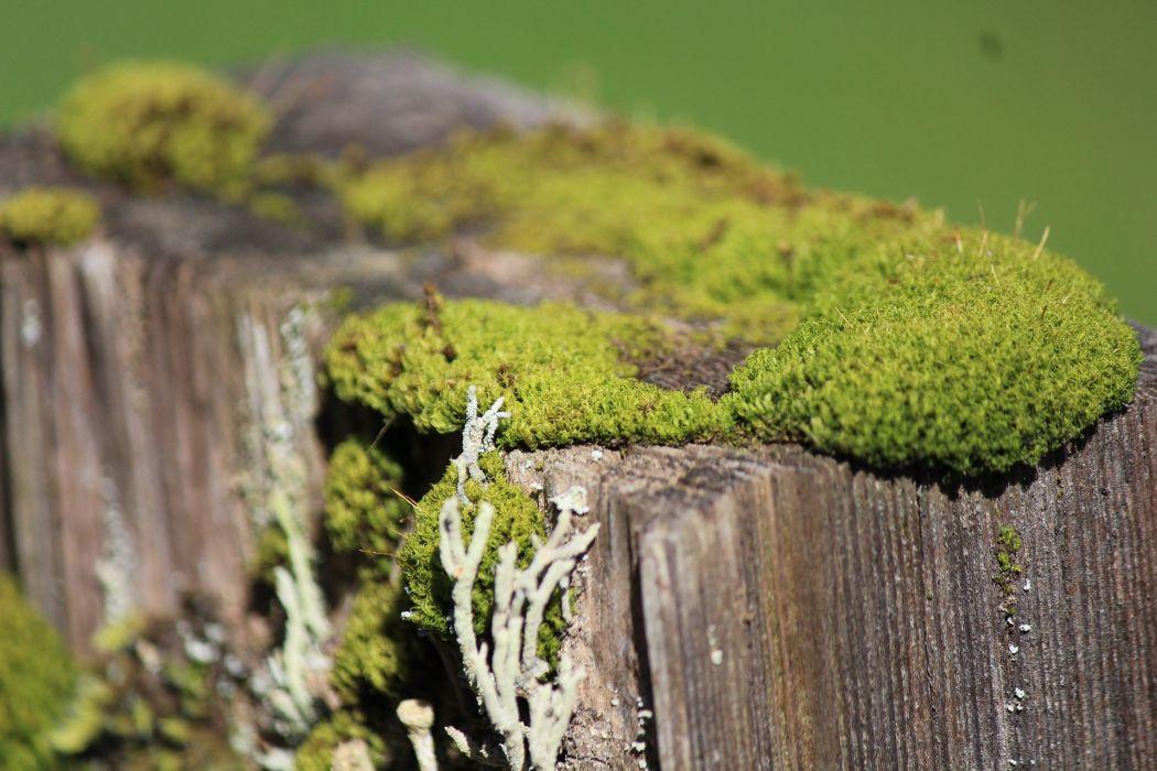 Moss003 wallpaper
