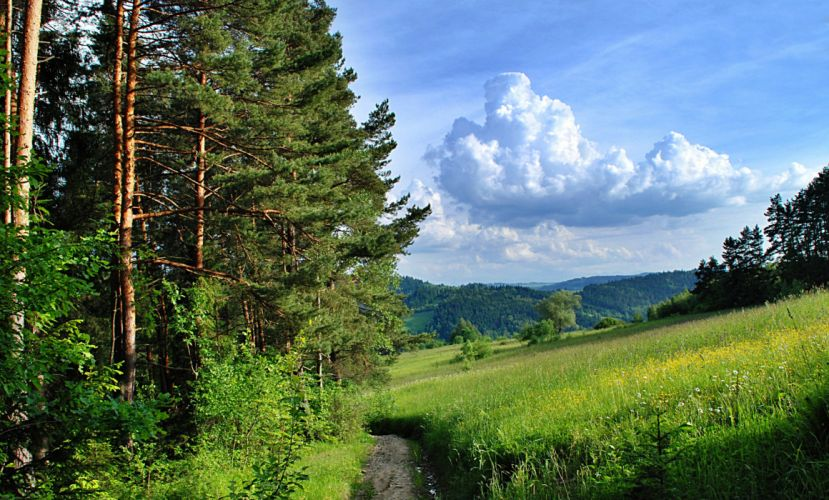 forest trees path summer wallpaper