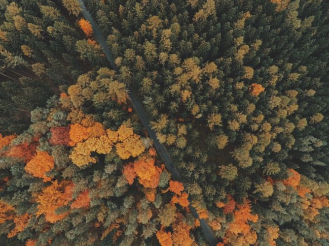 forest trees top view wallpaper