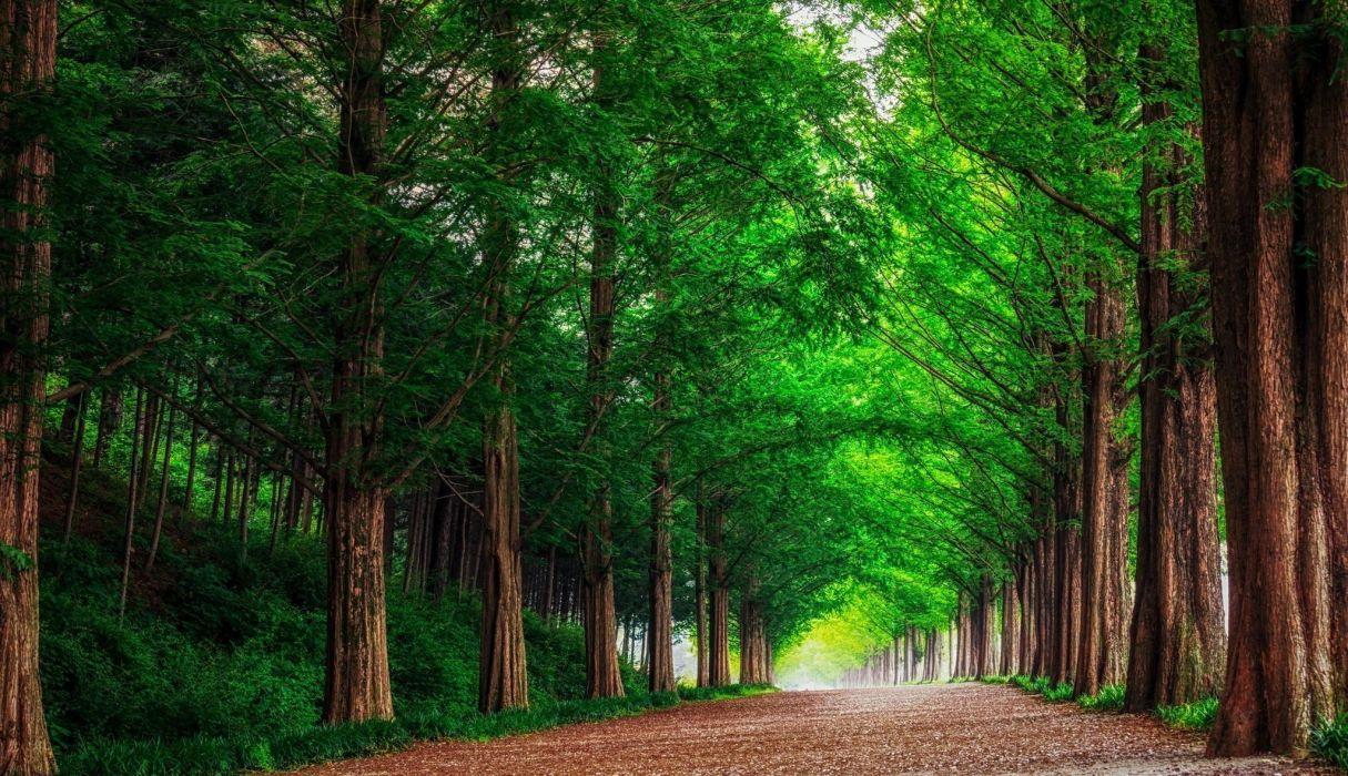 forest road trees landscape summer wallpaper