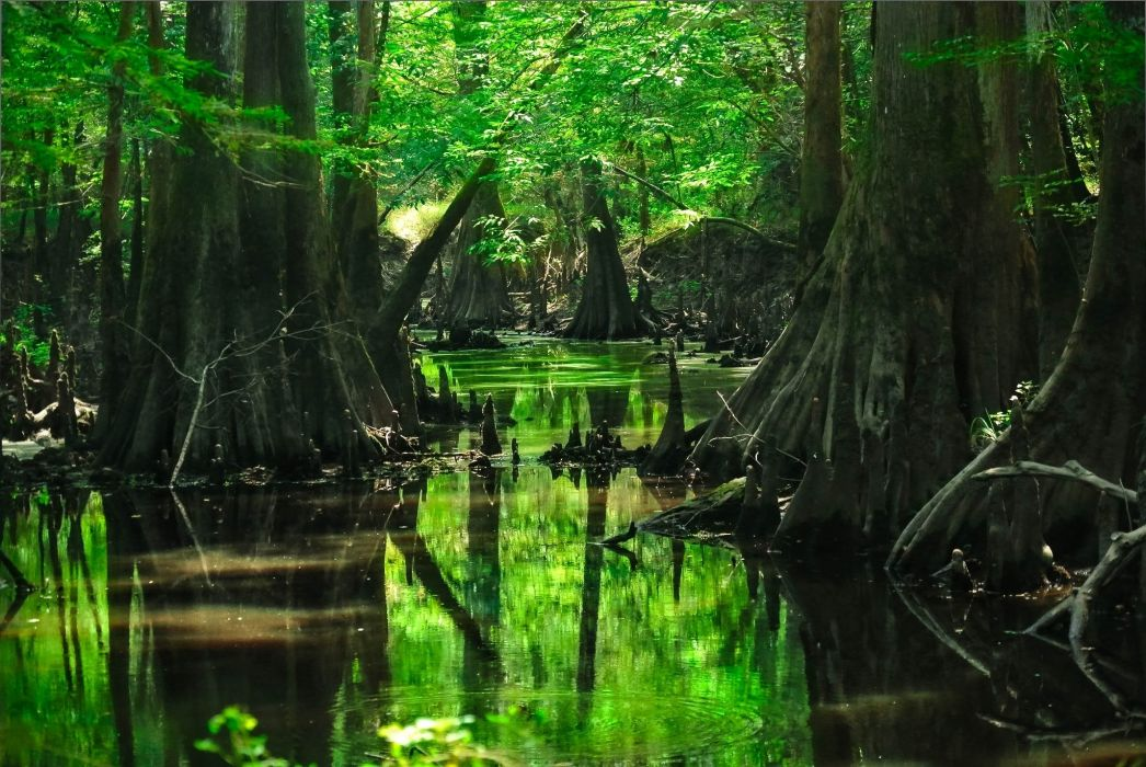 forest trees water wallpaper