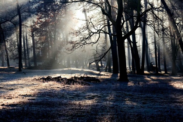 forest trees shadow light wallpaper