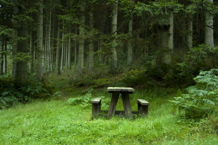 forest meadow benches table landscape wallpaper