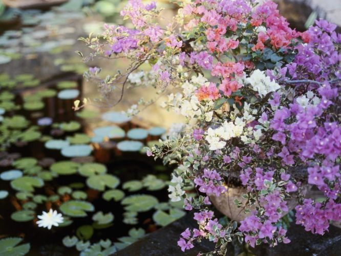 flowers balcony planters pond leaves wallpaper