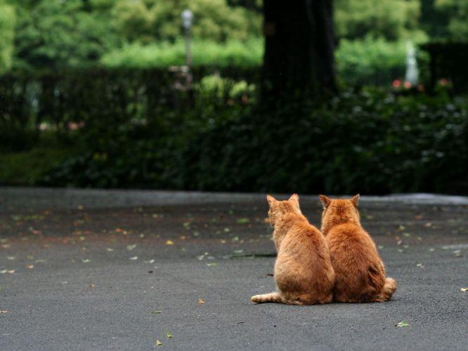 animal cute cats couple sitting wallpaper