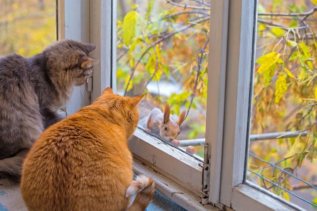 cute animal cats window squirrel branch wallpaper