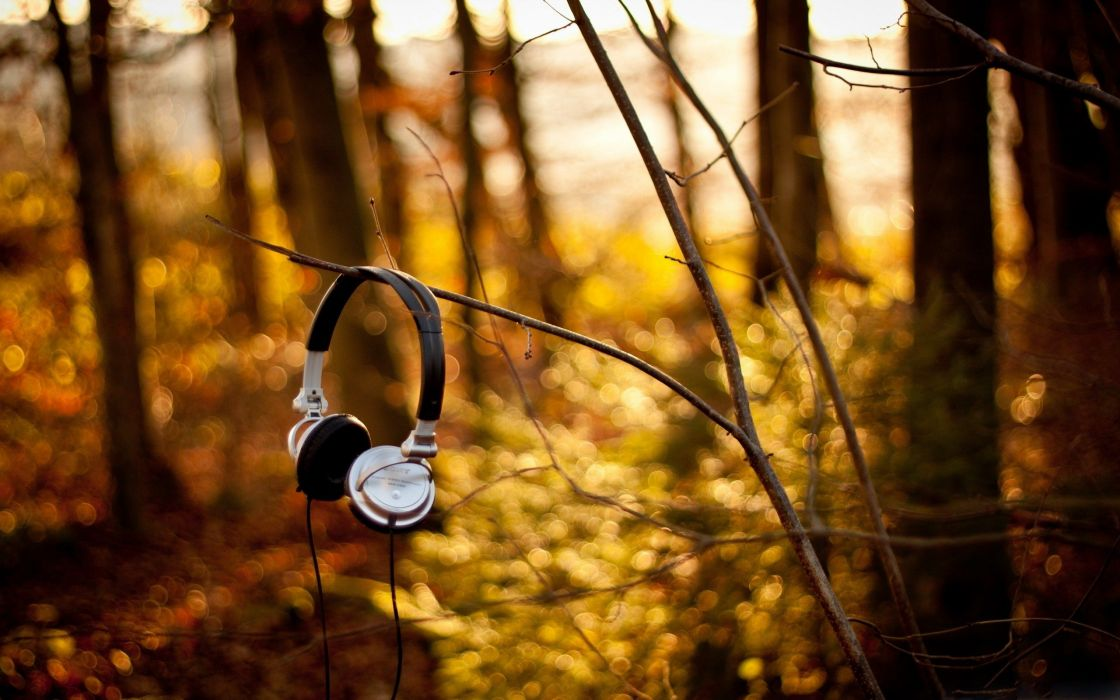 headphones forest branch wire morning wallpaper