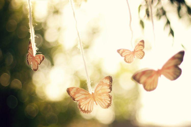 butterfly plant set branch blur light wallpaper
