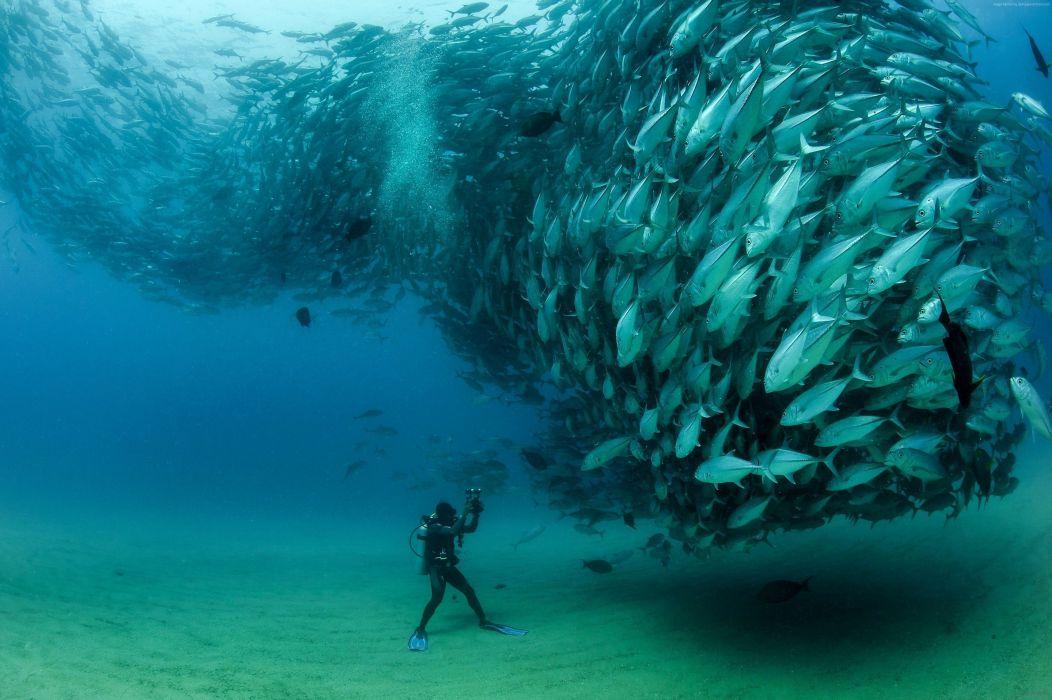banco peces atun buzo wallpaper