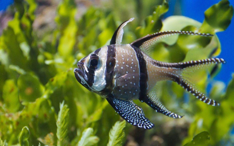 pez animales algas marino wallpaper