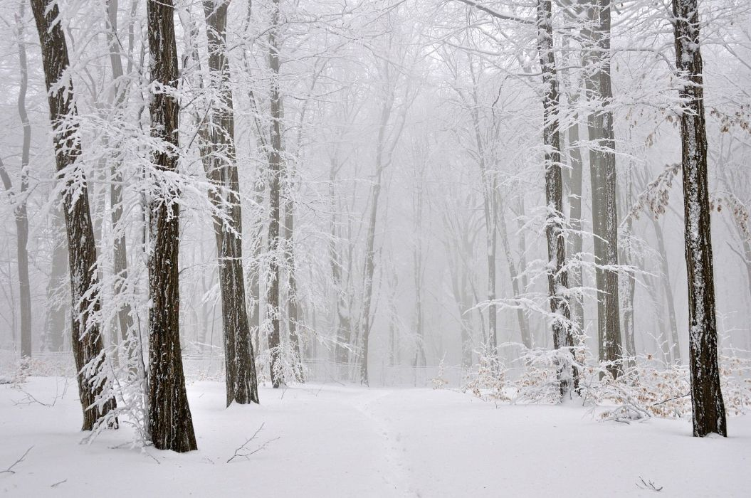original photo mist fog forest winter cold nature tree wallpaper