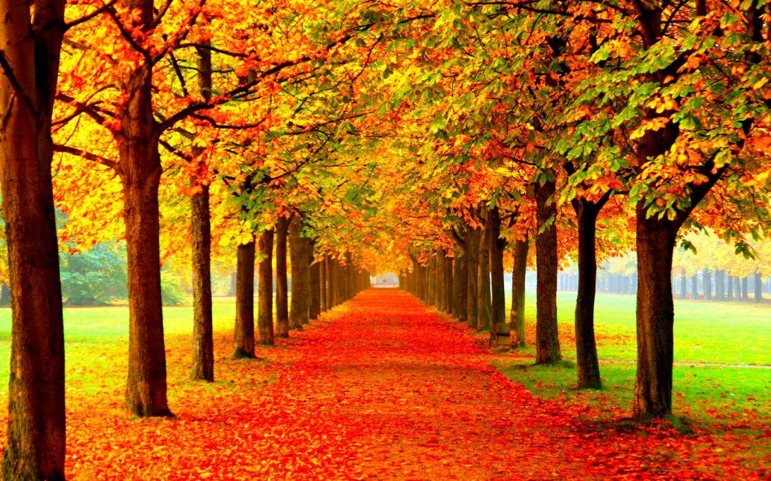 Autumn Fall Season Nature Landscape Leaf Leaves Color