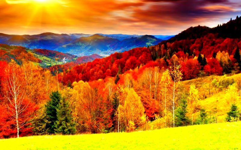 autumn fall season nature landscape leaf leaves color seasons tree forest wallpaper