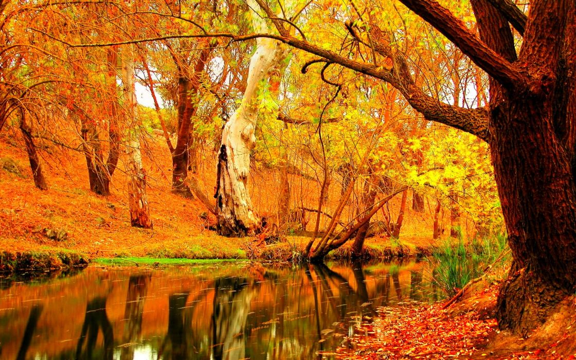 autumn fall season nature landscape leaf leaves color seasons tree forest wallpaper