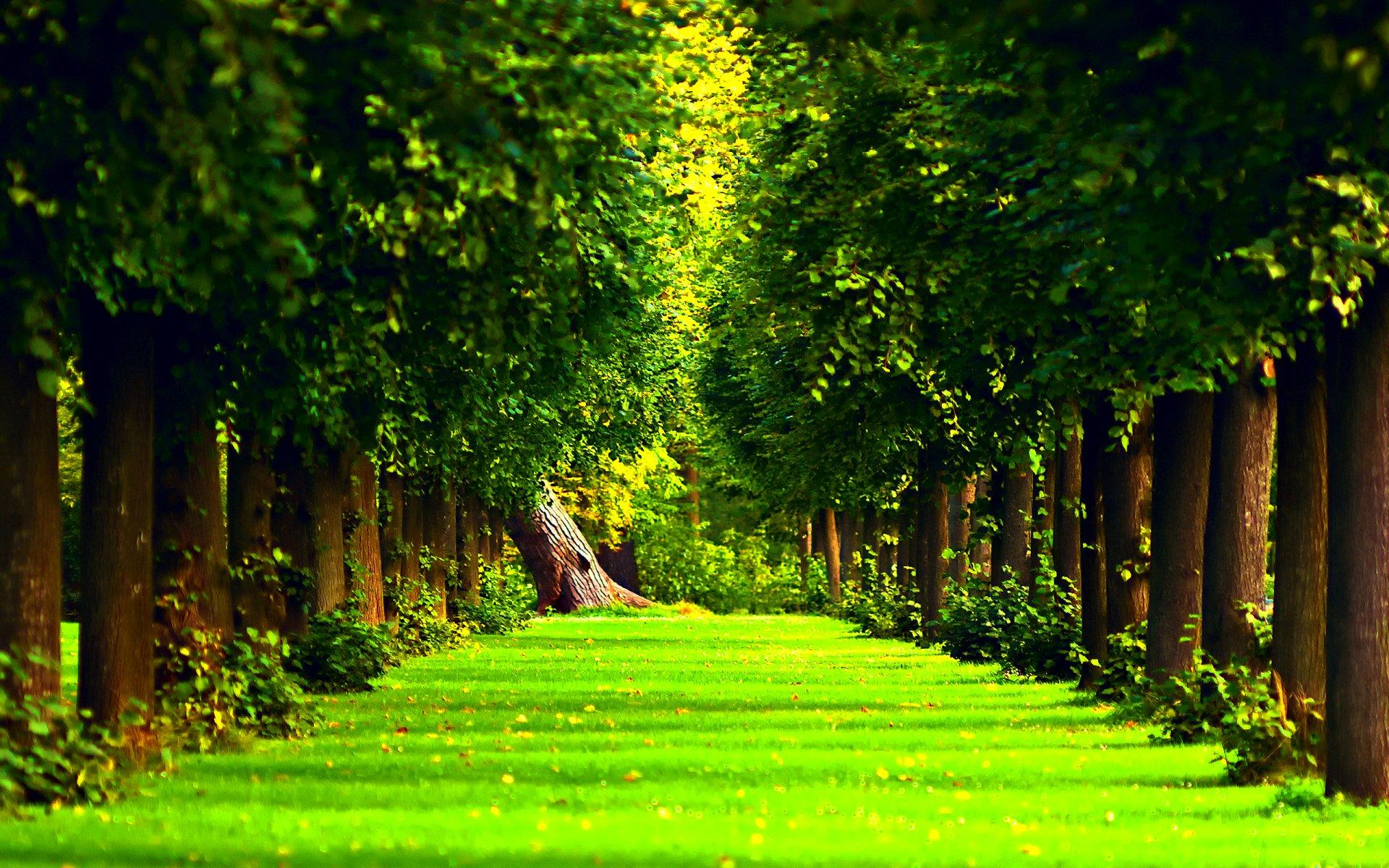 landscape nature tree litsva - photo #11