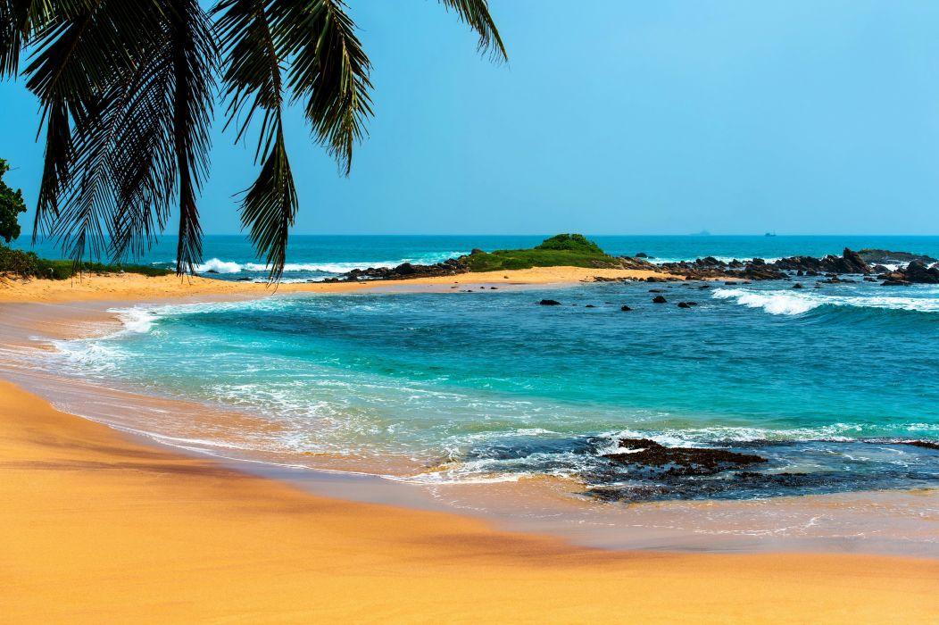 playa mar palmera naturaleza wallpaper
