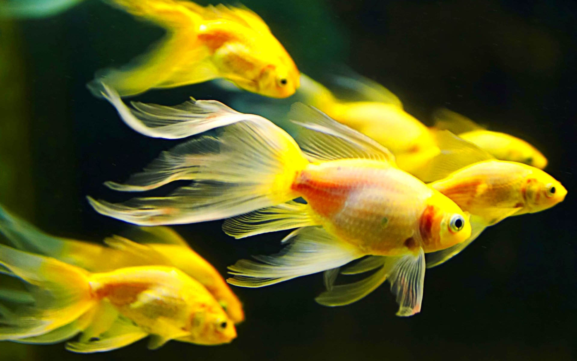 fish fishes underwater ocean sea sealife nature wallpaper
