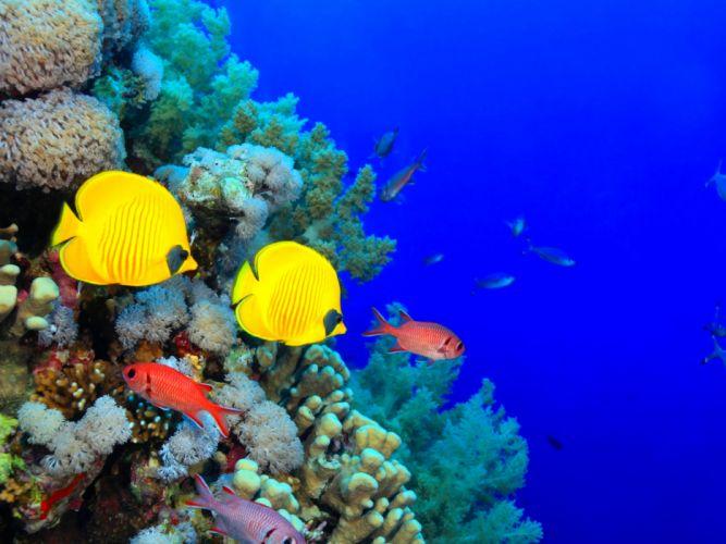 fish fishes underwater ocean sea sealife nature wallpaper