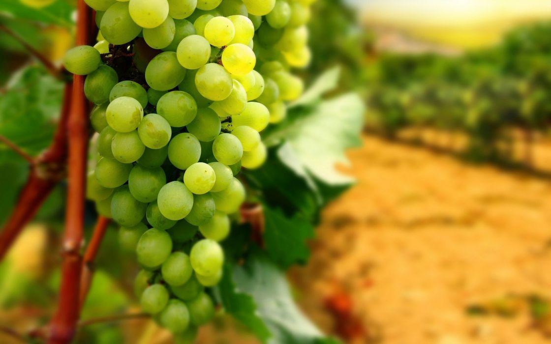 racimo uva blanca frutas wallpaper
