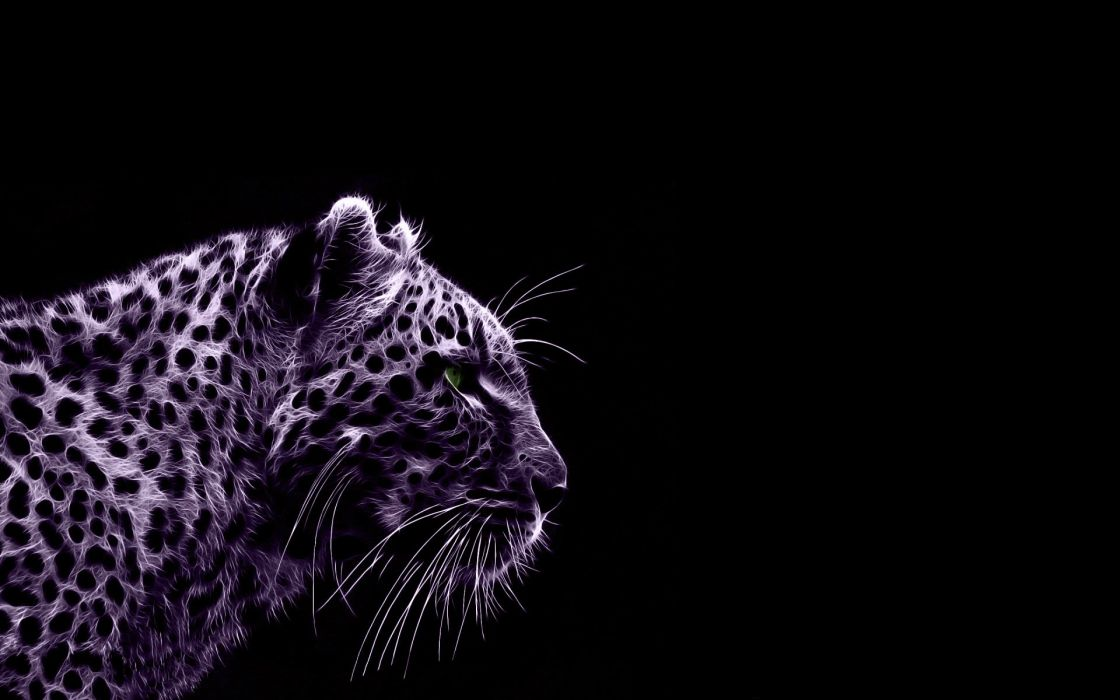 TIGER cat predator cats fantasy asian oriental nature jungle wallpaper