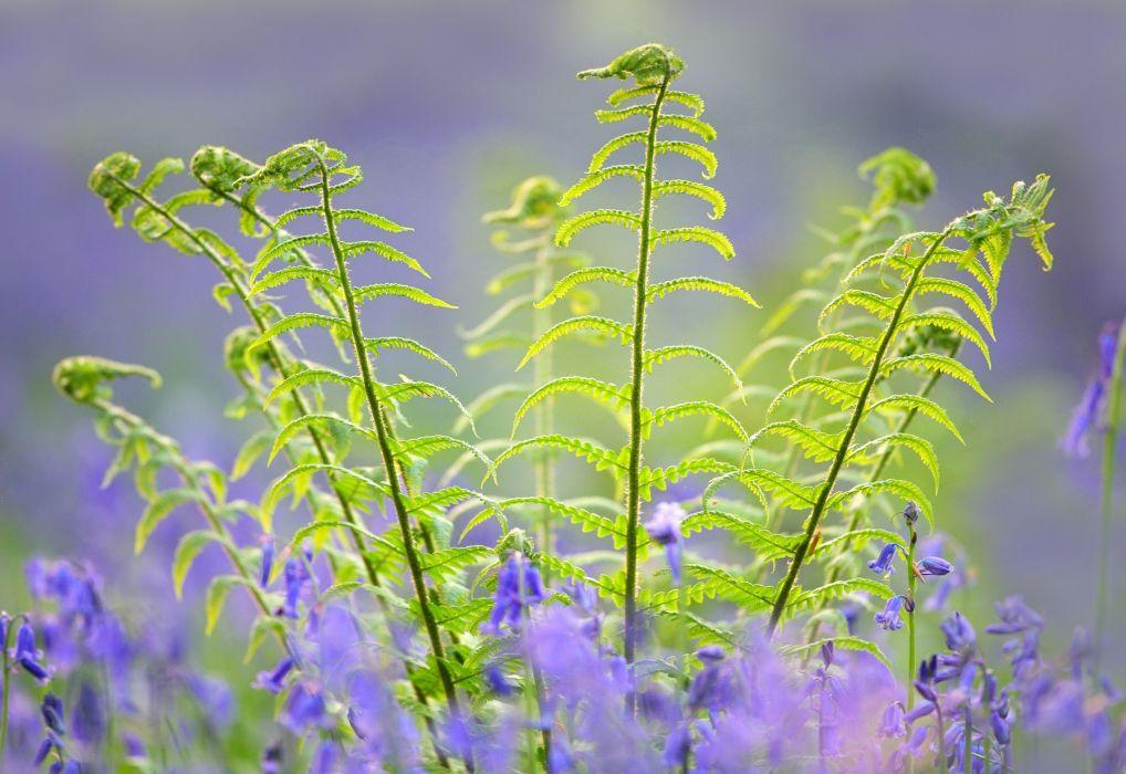 planta naturaleza hojas wallpaper