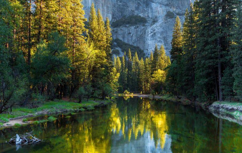 cauce rio arboles naturaleza wallpaper